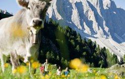 Vacanze Dolomiti 2